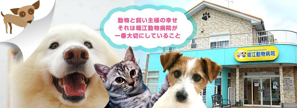 堀江動物病院はフィラリア予防、ノミ、マダニ予防、マイクロチップ埋め込み、避妊、去勢手術、古河市ので犬と猫の診療、親切、丁寧な対応、細かい所までの気遣い、インフォームドコンセント(相互理解のある説明)を心がけている動物病院です。